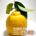 和歌山特産 有田 「田村」の三宝柑 (さんぼうかん) 10kg 54個入り