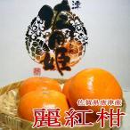 佐賀産 吉森 佐用姫「麗紅(れいこう)」オレンジ 12個入り化粧箱