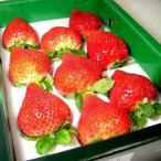 いちご 博多 あまおうイチゴ  大粒12個前後入り 化粧箱 福岡産 希少品の為お届け日の指定はいただけません。不都合日があればお知らせください |