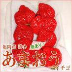 いちご  博多 あまおう イチゴ  訳あり 5L大粒  2パック入り箱  G  福岡産 甘王 ジャム 変形 アウトレット いちご イチゴ 苺  ストロベリー