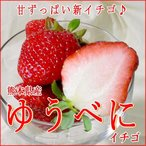 いちご ゆうべに イチゴ 大玉 3Lサイズ 2パック入り箱 熊本産 苺 ストロベリー ひな祭り クリスマス ギフト