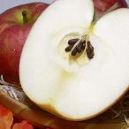 訳あり サンつがるりんご 約5kg 18〜23個入り 送料無料 青森産|アップル リンゴ 林檎 アウトレット 津軽 青森りんご 送料込み