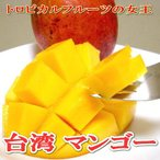 マンゴー 台湾産 マンゴー 大玉 12〜14個入り| アップルマンゴー お中元 ギフト プレゼント