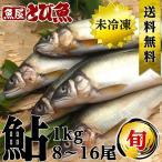 あゆ 鮎 アユ 養殖  1kg(8-16尾) 生 送料無料