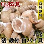 【送料無料】活  白バイ貝 1kg 殻付 バイ貝