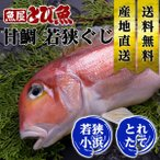 天然 若狭ぐじ 特大 約900g〜1.1kg 1尾 あまだい アマダイ 甘鯛 生 送料無料