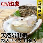 【送料無料】若狭小浜 天然岩カキ 岩牡蠣 カキ 特大サイズ 400g〜600g前後 15個セット バーベキュー お徳用 大容量