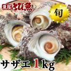 サザエ 天然 活 1kg (8-15個) 若狭湾産