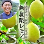 レモン 国産 無農薬 送料無料 10kg イエローレモン ノーワックス 農園直送 和歌山産 有機栽培 産地直送 オーガニック グリーンジャンクション