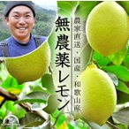 レモン 無農薬 5kg 国産 有機栽培 和歌山