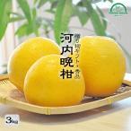 河内晩柑 父の日 3kg 贈り物 ギフト 送料無料 お中元 農家直送 贈答用 柑橘 フルーツ 果物 マルナカ農園