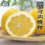 河内晩柑 送料無料 3kg 宇和ゴールド ジューシーオレンジ フルーツ 果物 柑橘 愛媛 八幡浜