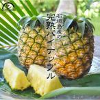 パイナップル 沖縄 石垣島 4玉入 4kg 送料無料 果物 フルーツ お中元 プレゼント 国産  パイン