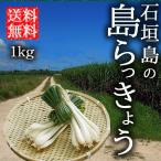 島らっきょう 1kg 生 土付き 送料無料 沖縄産 石垣島産 農園直送