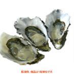 殻付き生食用カキ(牡蠣) キャッツアイ 1粒