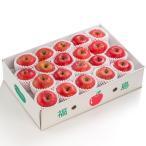 送料無料 福島県産 サンふじ5kg(12玉〜18玉) リンゴ 林檎 りんご 菱沼農園
