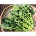 つぼみ菜 (1束:150g) 農薬・化学肥料不使用