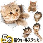 Yahoo!TOP1!プライスウォールステッカー 超リアル!キャット柄 全5種セット 猫ちゃんが壁からひょっこり顔を出す☆ 壁シール おしゃれ 雑貨 ついで買いセール ■■ ◇ とびだす猫DL