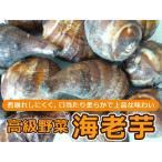 海老芋 孫芋 500g 静岡県磐田産 500g入り1箱 高級京野菜でおなじみの海老芋