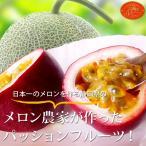 パッションフルーツ(贈答用) 【太陽のルビー】最高級のパッションフルーツ 1箱(12個入)Lサイズ☆1玉100g前後