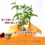 最低2玉収穫保証パッションフルーツの苗(鉢)