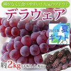 ぶどう  デラウェア 1箱2kg 大粒 / 種なしブドウ 葡萄★お中元に!