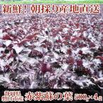 赤紫蘇 2kg(500g×4袋)葉のみ☆朝採り赤しそ産地直送☆梅干し作りに、赤シソジュースに!!