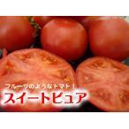 【フルーツトマトフェア】通常4,100円→特価3,960円 フルーツトマト スイートピュア 1箱  /  糖度が高くてフルーツのようなトマト!