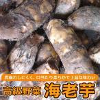 海老芋 孫芋 3kg 静岡県豊岡産 3kg入り1箱 高級京野菜でおなじみの海老芋