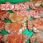其它 - 毛蟹を5-9杯約3キロ/北海道で水揚げ/毛がに/冷凍A