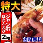 お中元 御中元 えび 海老 ジャンボサイズ特大ボタンエビ約2kg 約28〜32尾前後 送料無料 冷凍