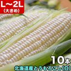 とうもろこし Lサイズ 白 ホワイト 10本 北海道産 8月下旬前後頃から注文順に出荷 お届け日指定不可選択指定無効