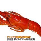 えび 海老 蝦 ボイルオマールロブスター オマールエビ Lサイズ約400g前後4尾 高級食材