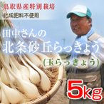 鳥取県産特別栽培 田中さんの北条砂丘らっきょう5kg(根付き土付き 玉らっきょう) 送料無料
