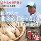 鳥取県産特別栽培 田中さんの北条砂丘らっきょう1kg(根付き土付き 玉らっきょう 国産) 送料無料(北海道・沖縄を除く)