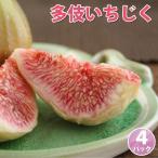 多伎いちじく(蓬莱柿/ほうらいし/イチジク)約300g(3〜5個入)×4パック 島根県多伎町産 送料無料