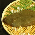 山陰沖産 天然ヒラメ(平目)約1kg