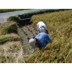 無農薬米 有機栽培米 コシヒカリ 玄米10kg×3袋 28年産