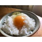 しあわせ卵かけご飯 土佐ジロー卵30個