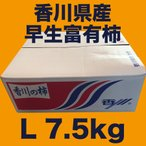 香川県産 早生富有柿 Lサイズ 7.5kg