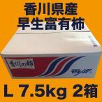 香川県産 早生富有柿 Lサイズ 7.5kg 2箱セット