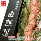 高知県産 特選 自然薯(じねんじょ) 1kg以上 切れ目の無い1本 送料無料 産直 贈答用