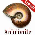 アンモナイト 化石 原石  771-1