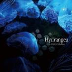 a crowd of rebellion Hydrangea CD
