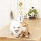テゴマス 猫中毒<通常盤> 12cmCD Single