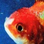 Vince Staples Big Fish Theory CD