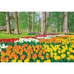 ジグソーパズル EPO-79-368 風景 チューリップ咲くキューケンホフ公園 −オランダ 450ピース