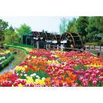 ジグソーパズル YAM-01-2069 日本の風景 チューリップ -花薫る-(富山) 108ラージピース