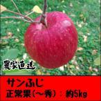 サンふじ正常果:約5kg(11玉〜20玉) 信州の美味しいりんご(樹上完熟・蜜入り)-長野県飯綱町(旧三水)産-