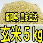 福岡県産 新米 無農薬栽培米 玄米5キロ